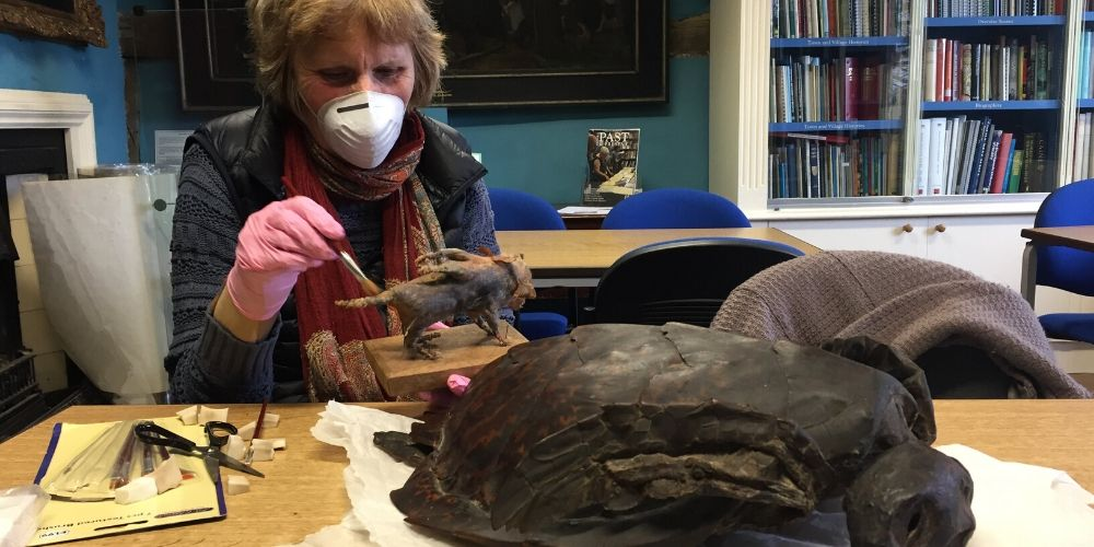 A museum volunteer cleaning fossilised objects