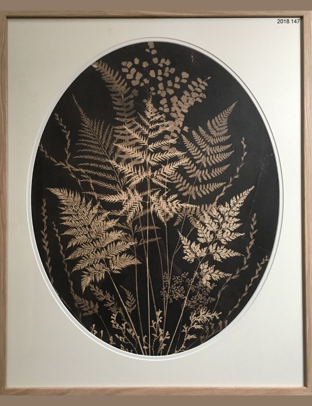 Nature print of ferns, the plants are gold on a black background