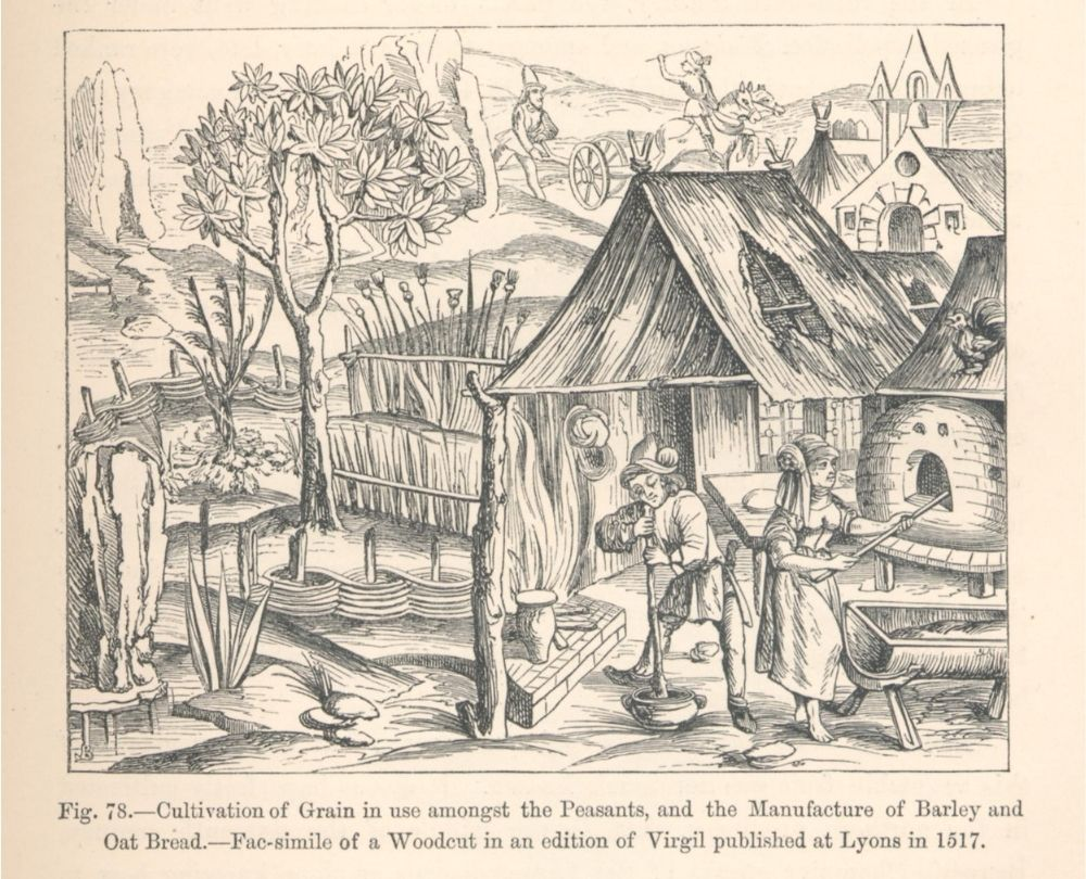 Woodcut image of 16th century peasants cultivating grain, barley and oats