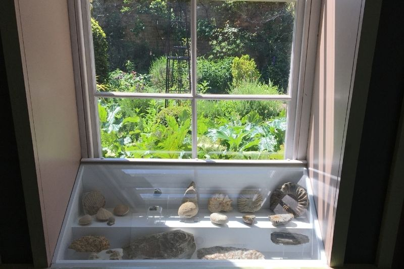 Flints and fossils are displayed in a freshly painted white cabinet in the window. The display catches the light from the museum garden beautifully